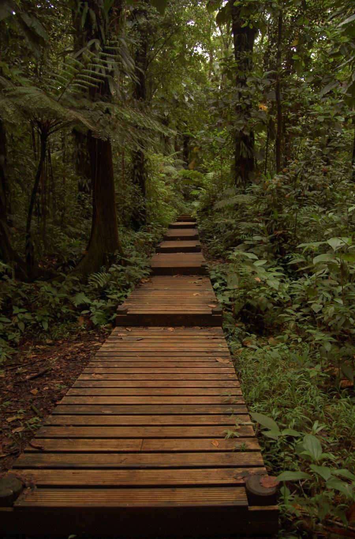 Hitbodedut in the rainforest