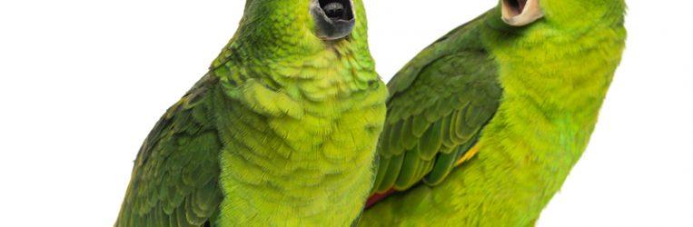 birdschirping.jpg