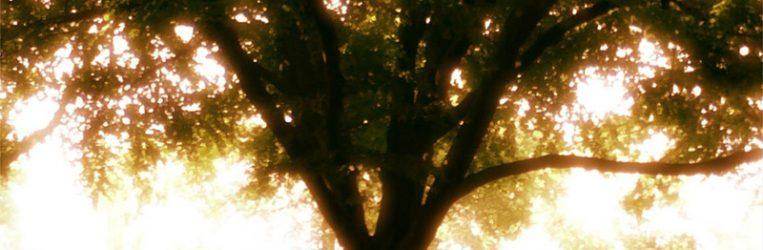 tzaddik-tree.jpg