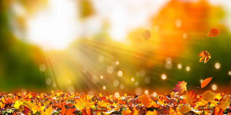 Daylight savings time is OFF(!), rain (finally!), leaves turning colors!
